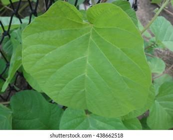 Herb - Shutterstock ID 438662518