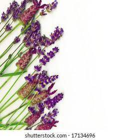 Border Made Healing Herbs Lavender Rosemary Stock Photo Edit Now