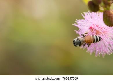 Sleepy Plant Images, Stock Photos & Vectors | Shutterstock