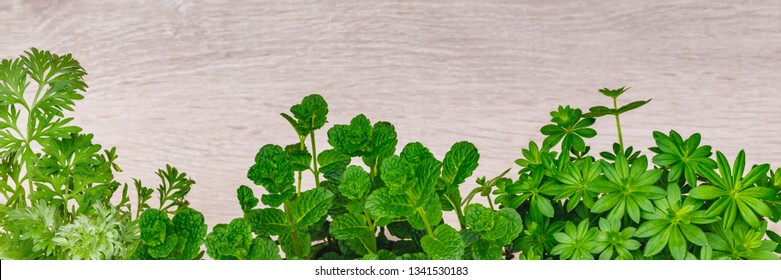 Herb plants Woodruff ( galium odoratum ), Mojito Mint,  Artemisia absinthium ( absinthe, absinthium, absinthe wormwood, wormwood ) for drinks, tea and cocktails, or cosmetic products, on  wooden table