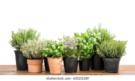 Herb in pot. Potted fresh green herbs on wooden kitchen table. Basil, rosemary, thyme, savory on white background