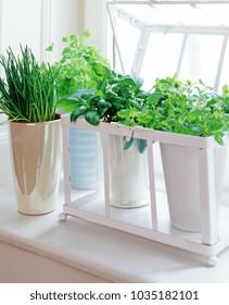 herb pots on the windowsill, basil, chive, oregano, chervil