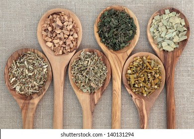 Herb selection for alternative medicine in olive wood spoons over beige background, hyssop, galangal root, damiana, nettle, mistletoe and eucalyptus, left to right.