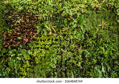 herb wall, plant wall, natural green wallpaper and background. nature wall.