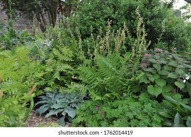 Herbaceous foliage plant border in a shady garden in May 2017