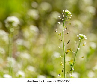 herbaceous plant in the desert