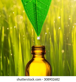 Herbal, alternative medicine, water drop falling down from a leaf to the bottle with blur paddy rice field background