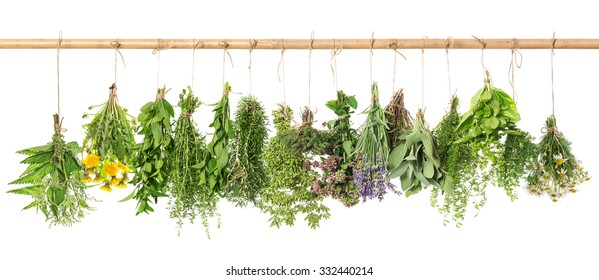 Herbal apothecary. Fresh herbs hanging isolated on white background. Basil, rosemary, sage, thyme, mint, oregano, marjoram, savory, lavender, dandelion, chamomile, nettle