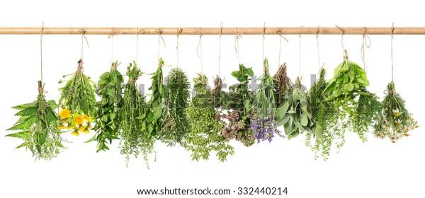 Kräuterapotheke.Frische Kräuter hängen einzeln auf weißem Hintergrund. Basilikum, Rosmarin, Salbei, Thymian, Minze, Oregano, Marjoram, Salate, Lavendel, Löwenzahn, Kamille