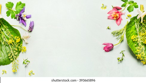 Herbal background with summer or spring garden flowers  and plant ,frame.  Top view, place for text, banner