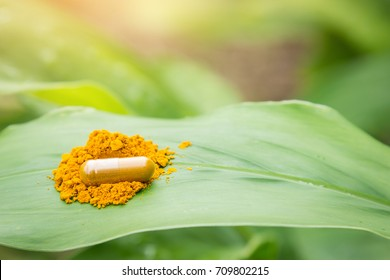 Herbal capsules with powder on turmeric leaf in garden for healthy eating lifestyle of good living with natural vitamin supplement