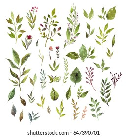 Herbal design set. Spring or summer decoration. Individual watercolor elements.