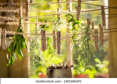 Herbal dryer with herbs dried on laundry lines
