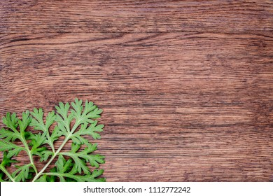 Herbal frame with Artemisia absinthium ( absinthe, absinthium, absinthe wormwood, wormwood ) leaves on brown wooden background, close up