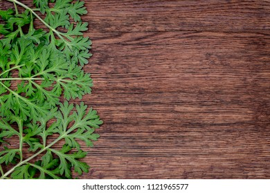 Herbal frame with Artemisia absinthium ( absinthe, absinthium, absinthe wormwood, wormwood ) leaves on brown wooden background, copy space