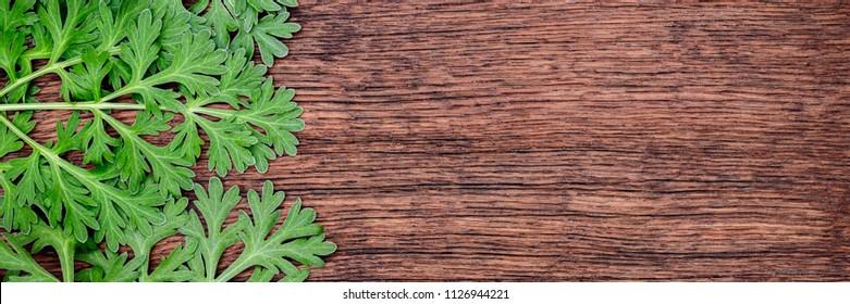 Herbal frame with Artemisia absinthium ( absinthe, absinthium, absinthe wormwood, wormwood ) leaves on  brown wooden background, banner close up