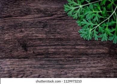 Herbal frame with Artemisia absinthium ( absinthe, absinthium, absinthe wormwood, wormwood ) on brown wooden background, close up