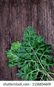 Herbal frame with Artemisia absinthium ( absinthe, absinthium, absinthe wormwood, wormwood ) leaves on black slate brown wooden background, close up