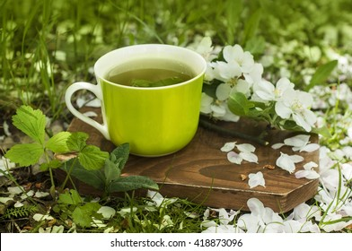 Herbal green tea in the green mug on a wooden board with a blooming apple tree branch, wild strawberry plant and some mint leaves, covered in flower petals. Cup of tee in a garden. Green background