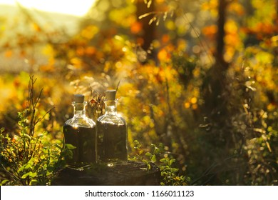 Herbal Green Tincture in the autumn forest.natural tincture of medicinal herbs in a  glass bottle on a stump in an autumn forest in bright sunlight.magic potion.Homeopathy