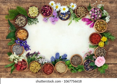 Herbal medicine background border with flowers and herbs used in natural alternative remedies with fresh herbs and flowers on parchment paper on rustic wood background. Top view.