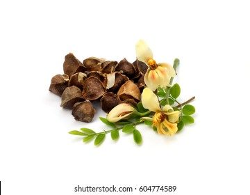 Herbal Moringa leaves with flower and seeds over white background