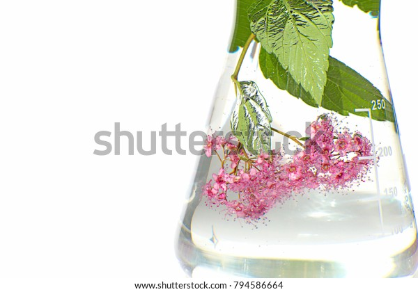 Herbal Natural Extract Aquatic Plant Extract Stock Photo
