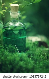 Herbal natural extract, green tincture in a bottle in a moss on a blurred forest background.