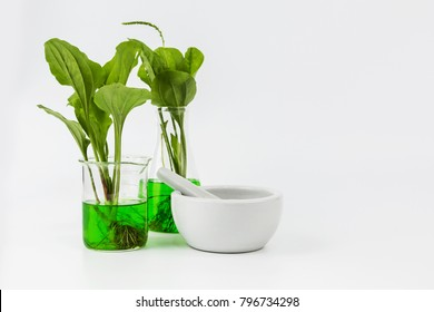 Herbal natural organic botany for Eco-friendly energy experiments concept.