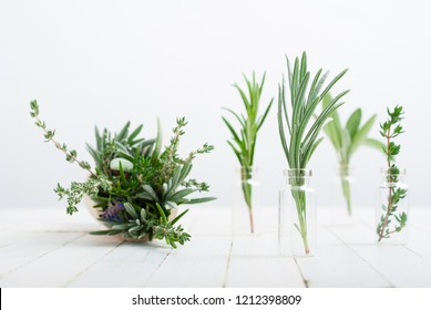 herbal plants in mini bottles and bunch on scoop, white wood table background
