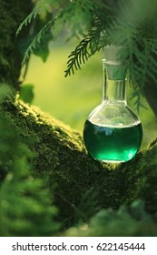 herbal potion On a mossy tree. Spell potion .  Herbal elixir. Magic Potion. Homeopathic medicine. Organic Cosmetics
