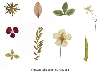 Herbarium and dried flowers isolated on a white background