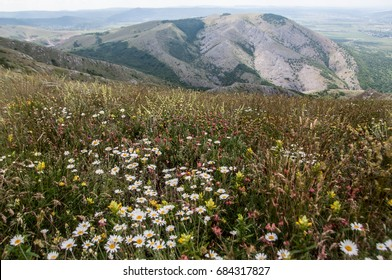 Herbs in alpine meadows in the mountains - chamomile and mountain grasses