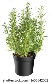 Herbs in black pot separated on white background