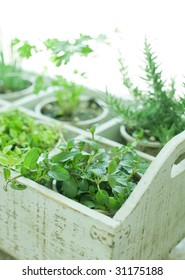 herbs in the box