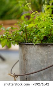 Herbs in a container.