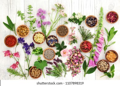 Herbs and flowers used in natural herbal medicine on rustic white wood background.