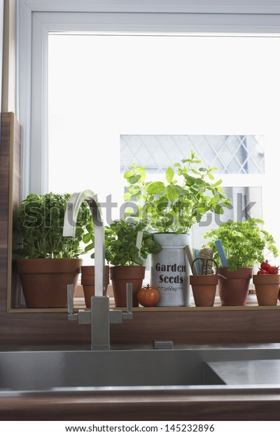 Hierbas cultivadas en macetas de flores en el fregadero