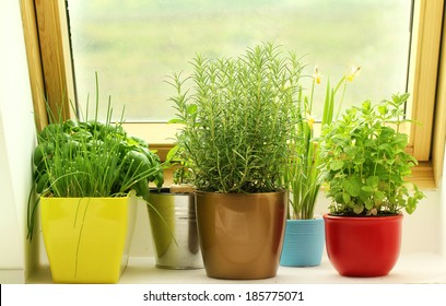 herbs growing on window