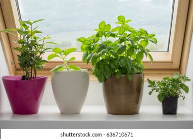 herbs growing in pot on kitchen window
