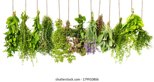 herbs hanging isolated on white background. food ingredients