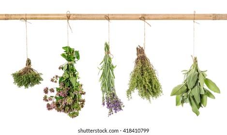 Herbs hanging isolated on white background. Fresh sage, thyme, oregano, marjoram, lavender