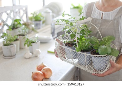 Herbs kitchen garden and woman