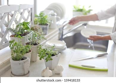 indoor kitchen garden. Herbs Kitchen Garden And Woman Indoor