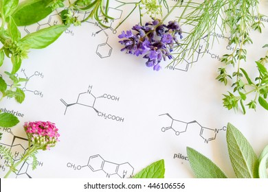 herbs on science sheet