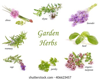 Herbs on white. Garden. Healthy spice. Collection isolated on white background.