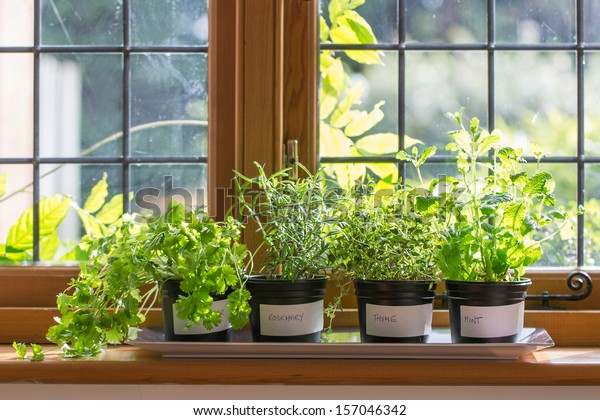 Herbs in plant pots growing on a windowsill