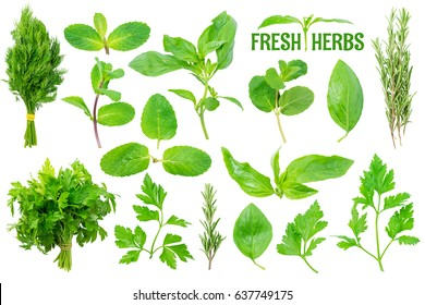 Herbs Set Isolated on White Background. Contain mint, basil, parsley, dill, rosemary.