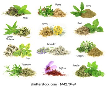Herbs and spice collection, fresh, dry and aromatic