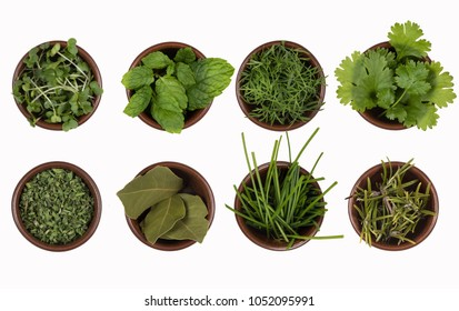 Herbs - water cress, mint, dill, parsley, bay leaves, chives and rosemary